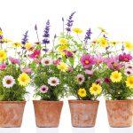 Produktaufnahme Blumen
