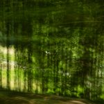 Landschaft in Bewegung Bewegungsunschärfe